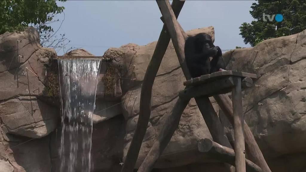 Hitzewoche Mensch und Tier suchen nach Abkühlung