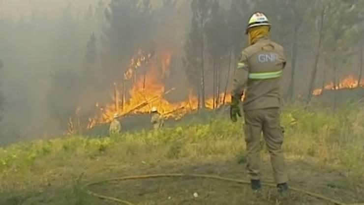 Hunderte Feuerwehrleute versuchen in Portugal, die Flammen einzudämmen