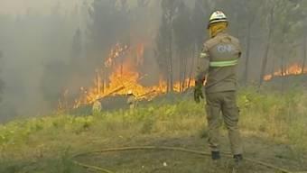 Waldbrände in Portugal im Juli 2019