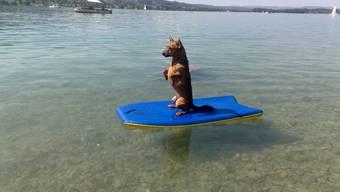 Hund Strolchi surft auf dem Hallwilersee