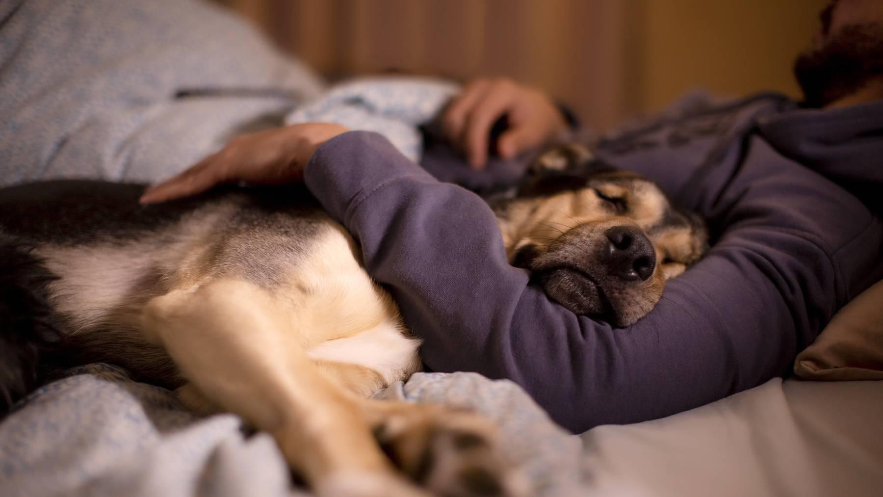 Des Menschen bester Freund: Der Hund.