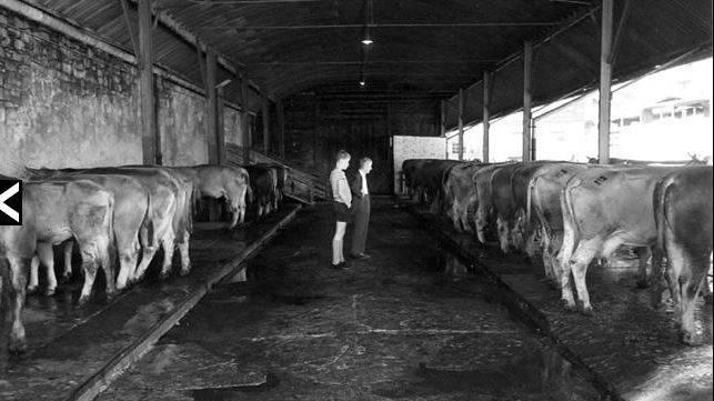 Viehmarkt an der Bruchstrasse in Luzern