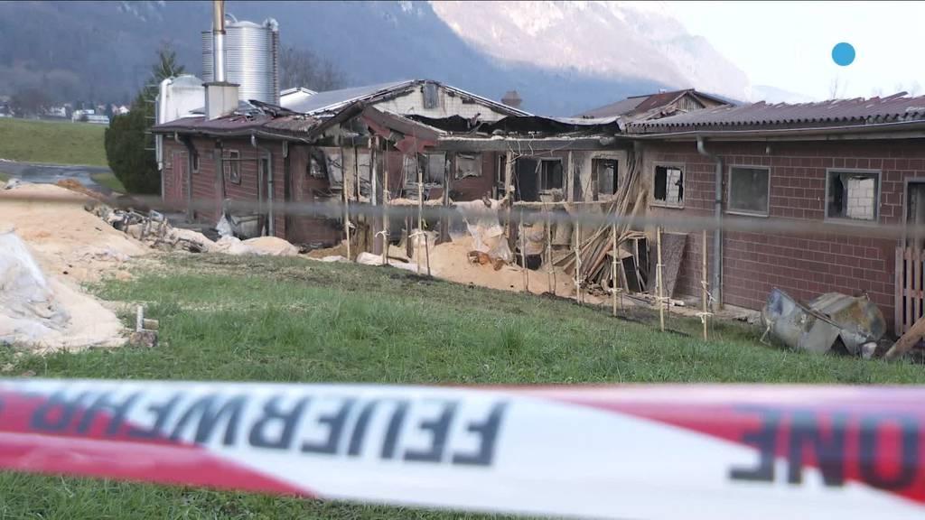Nach Brand: Pächter spricht über Verlust der 400 Schweine