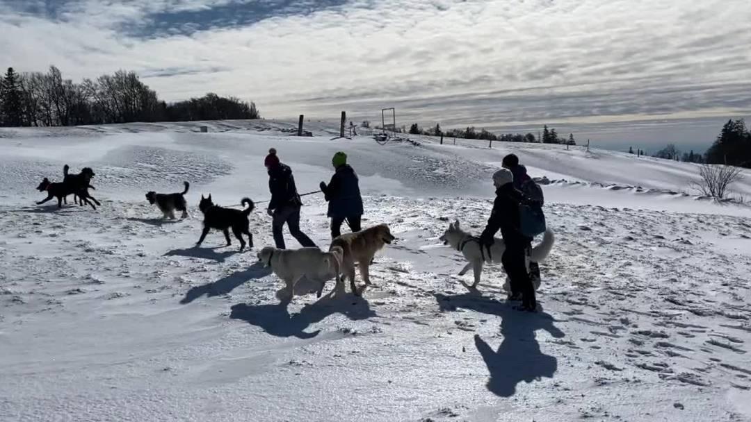 Ausflug der Hundeschule Berghof vom 29.Februar 2020 auf den Weissenstein