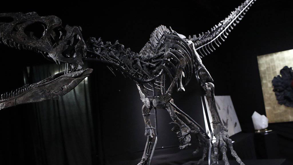 Dieses Allosaurus-Skelett brachte an einer Auktion mehr als eine Million Euro ein.