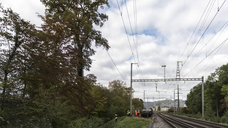 Die Sicherheitsholzerei der SBB liegt zwischen Regensdorf und Zürich.