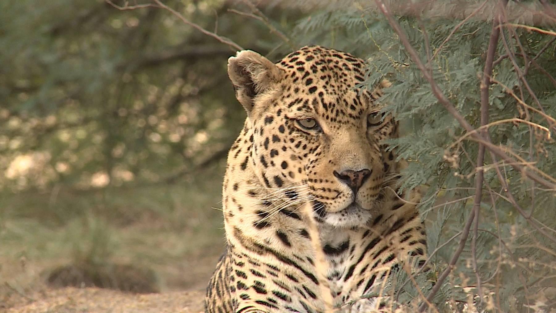 Weihnachtsspezial 2: Tierische Rettungsaktion – Vom Kriegsgebiet nach Südafrika