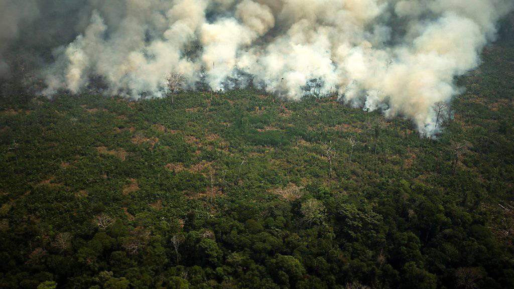 Bolsonaro schickt Armee zur Brandbekämpfung ins Amazonasgebiet