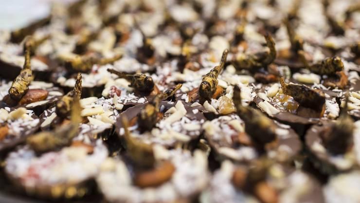 Schokoladen Pralines garniert mit einer jungen Feldheuschrecke.