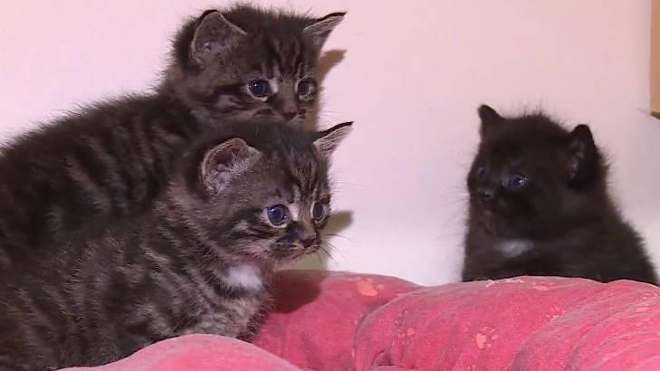 Im Tierheim in Sicherheit - drei der vier Kätzchen.