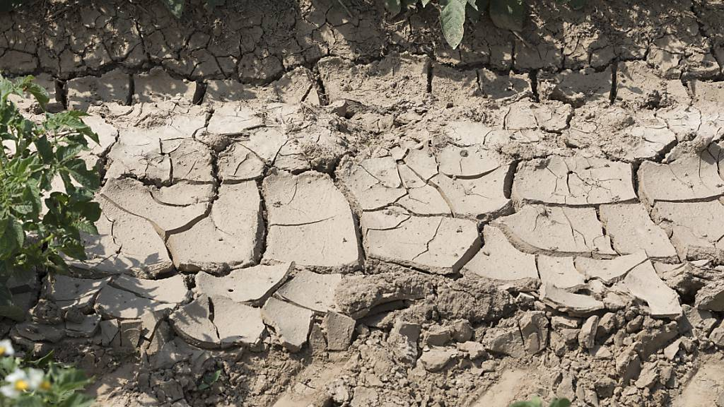 Klimawandel stellt Produktion von Milch, Kaffee und Co auf den Kopf
