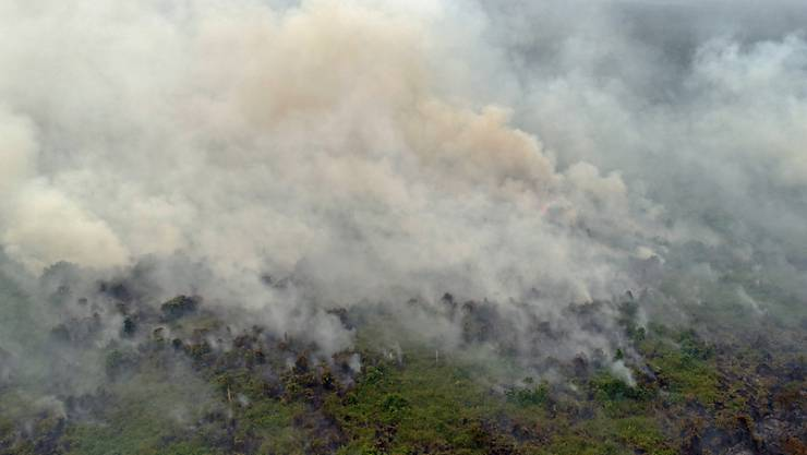 Seit zwei Wochen wüten auf Borneo schwere Waldbrände, nun hat die Luftverschmutzung ein gefährliches Niveau in Teilen der Insel erreicht. Im malaysischen Bundesstaat Sarawak im Nordwesten Borneos sind die hohen Schadstoffwerte laut Behördenangaben nunmehr gesundheitsschädlich. (Archivbild)