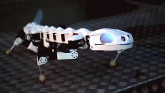 Keiner kann Bewegung eines Tiers exakter nachahmen: Der «Pleurobot» ist ein künstlicher Salamander.