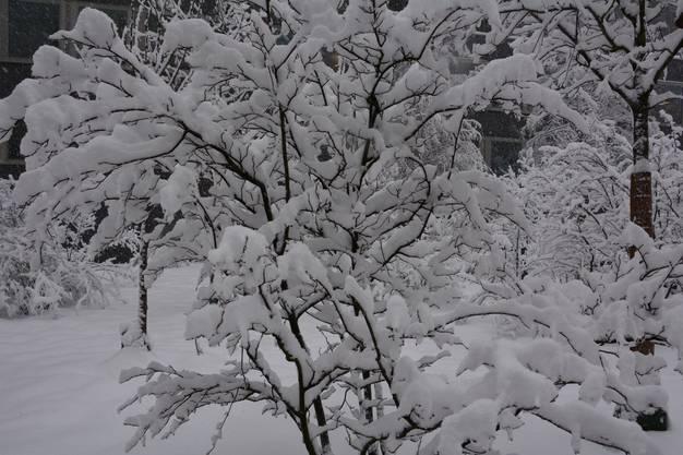 Tief verschneit präsentiert sich die Barmelweid auf 771 Metern über Meer am Donnerstag.