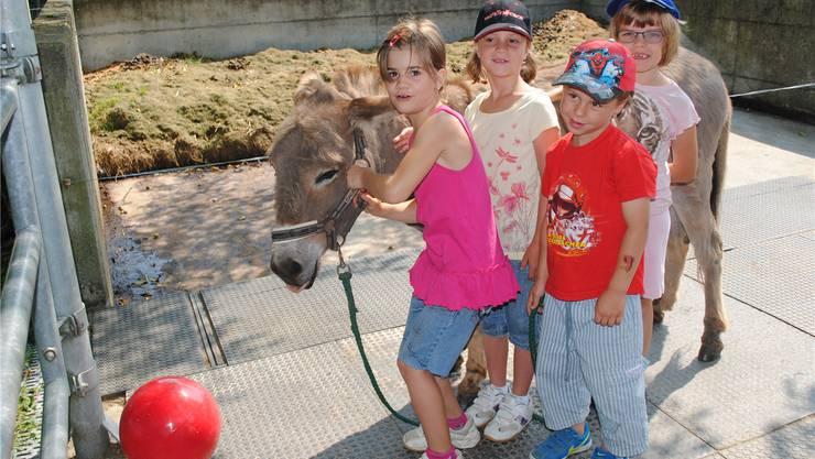 Die Kinder hatten ihren Spass mit den Grautieren.