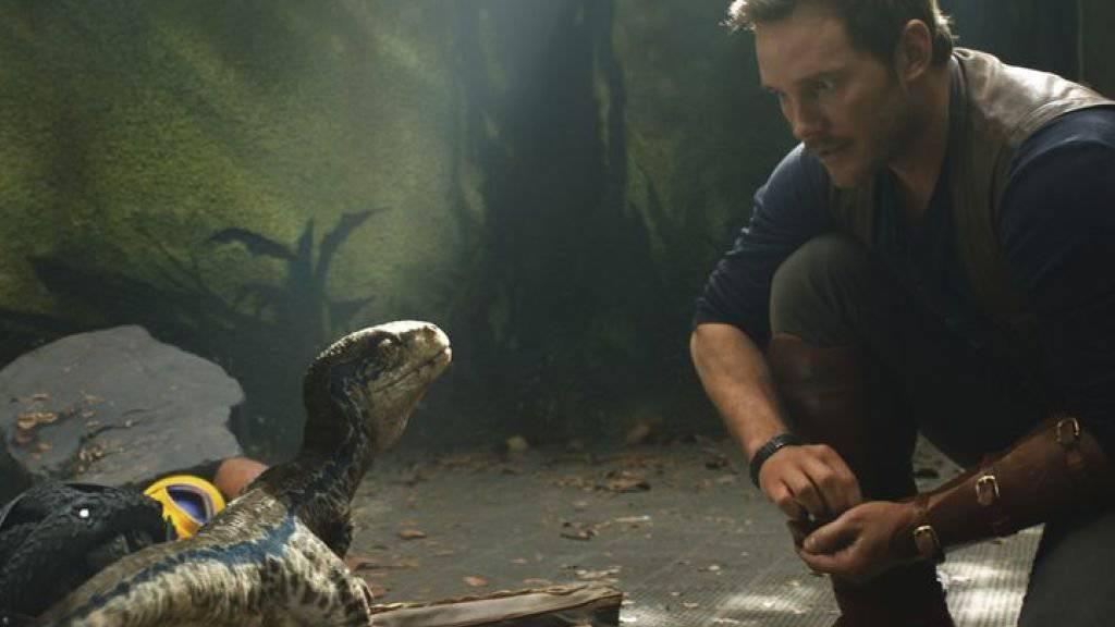 """Chris Pratt in """"Jurassic World: Fallen Kingdom."""" Der Film hat gemäss US-Branchenblättern soeben die 1-Milliarden-Dollar-Marke geknackt. (zVg)"""