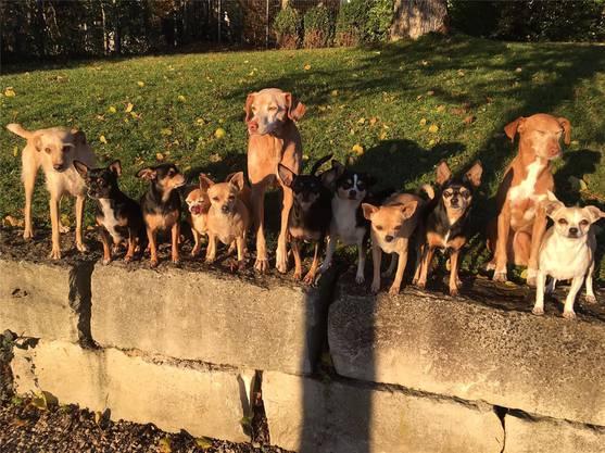 Felix, «der Glückliche»: Am Beispiel seines Hundes (der grosse in der Bildmitte) erläutert Felix Bertram die Bedeutung der Seelen-Pflege im Heilungsprozess. zvg
