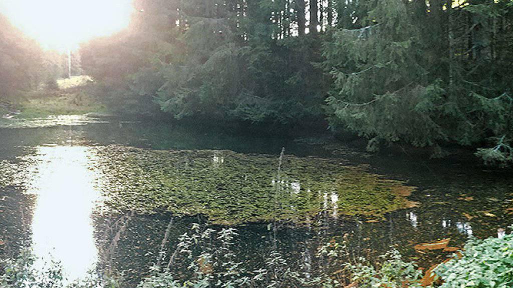 In diesen Tümpel im Wald gelangt man nur über Land, und doch gibt es hier Fische. Basler Forscher hinterfragen die Theorie, wie die Fische in solche Gewässer kommen.