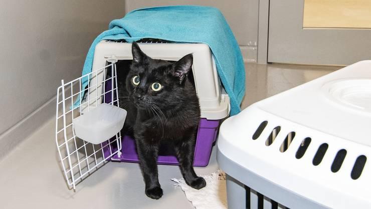 Die meisten Katzen werden in der Nacht gefunden und kommen so ins Tierheim.