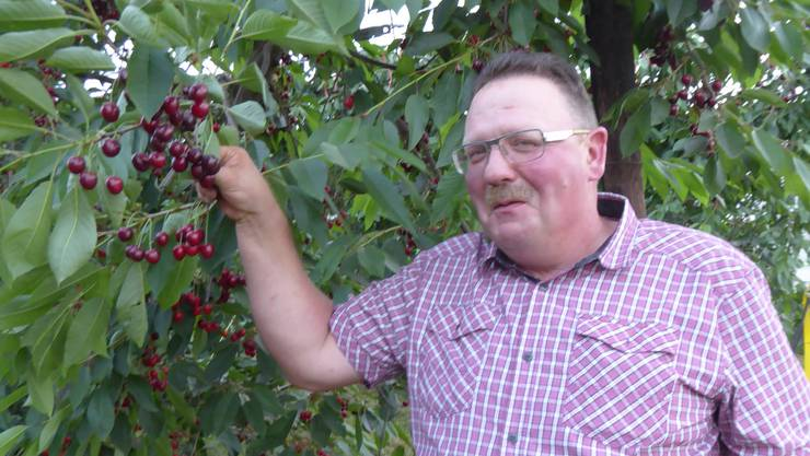 Kurt Rennhard hat die besten Kirschen im Kanton.