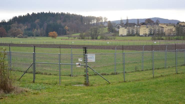 Es gibt einen Ort in der Schweiz, wo  gentechnisch veränderte Pflanzen angebaut werden dürfen. In Reckenholz, bei Zürich.