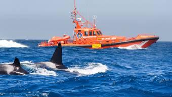 Der Spanische Seenotrettungsdienst musste mehrfach wegen Orca-Angriffe ausrücken.
