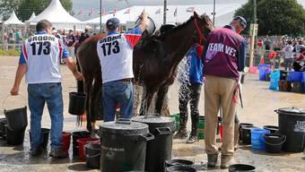 Beim Distanzreiten werden die Pferde regelmässig auf ihren gesundheitlichen Zustand überprüft – Doping wird damit aber nicht entdeckt.