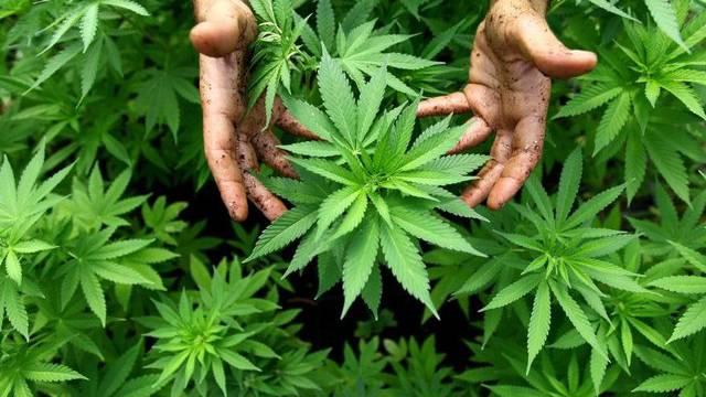 Die Schweiz wird im Bericht als Herkunftsland für Cannabis aufgeführt