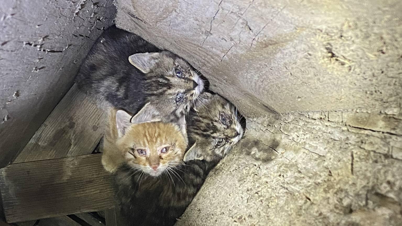 MM097_Katzen-Babys aus misslicher Lage befreit_20.Mai 2020