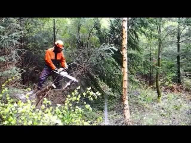 Unterwegs mit dem Forstbetrieb Bucheggberg