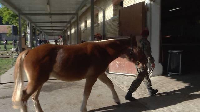 Kaum Interessenten für Quälhof-Pferde