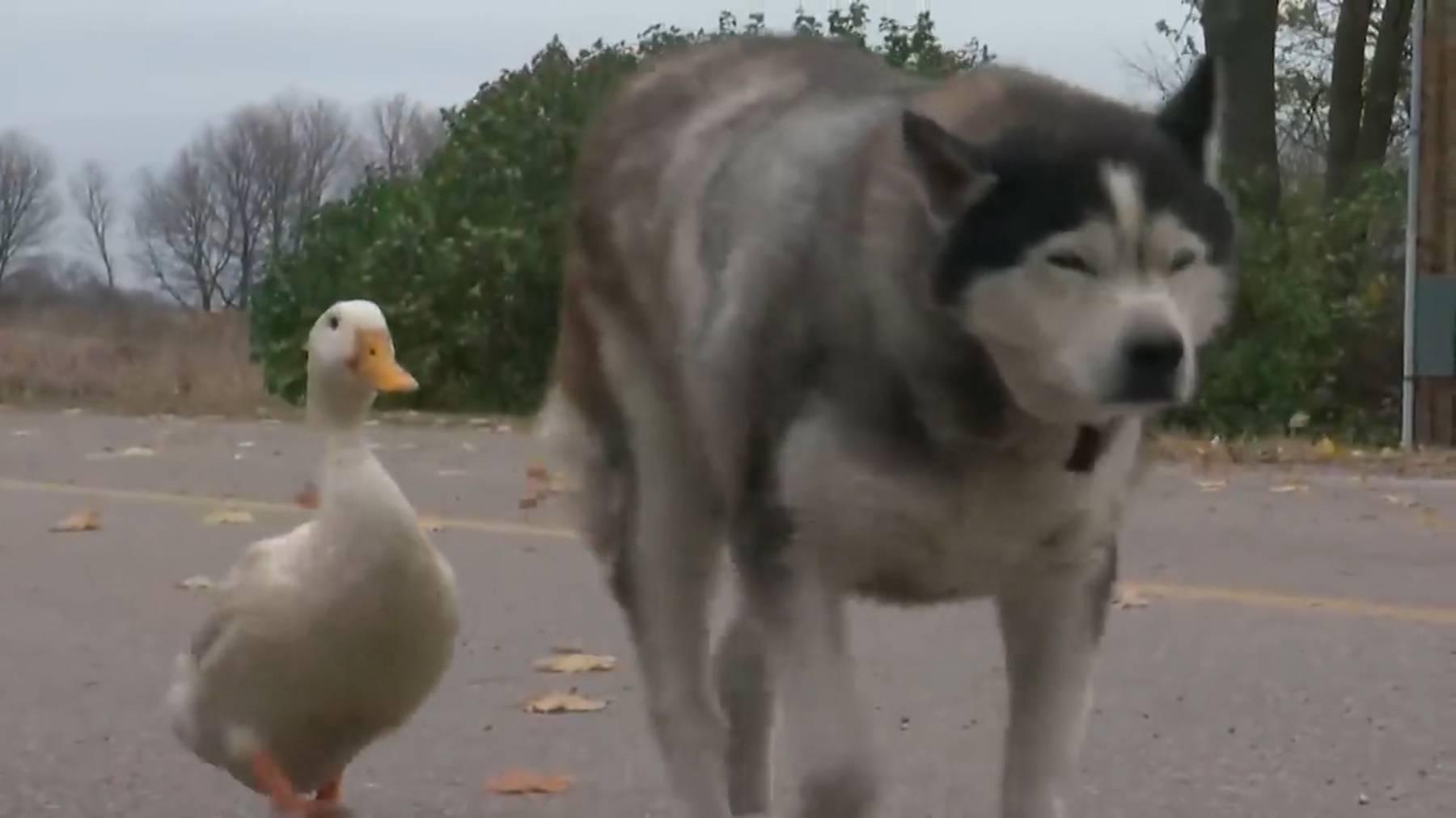 Tierische Freunde: Max und Quakers