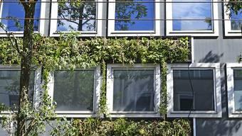 Gebäude mit begrünten Fassaden sollen grösser gebaut werden können: Im Bild ein Geschäftshaus in Zürich. (Archivbild)