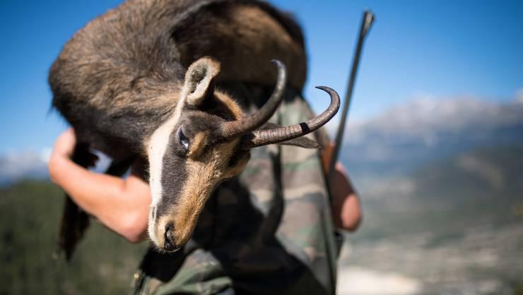 In der Region von Nax fand Ende September die Hochjagd statt – die Jäger schossen genug Tiere (etwa wie hier Gämsen), weshalb eine Nachjagd nicht mehr nötig ist.