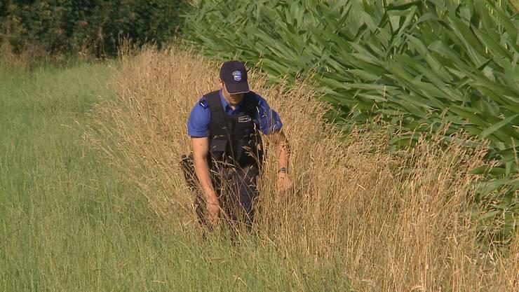Polizeikräfte sind rund um das Maisfeld verteilt.