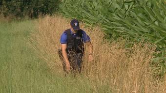 Grossfahndung nach versteckten Einbrecher in Maisfeld bei Suhr