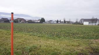 Das Feld (Parzelle 299) liegt in mehreren Zonen. Der Gemeinderat möchte die Parzelle teilweise um- oder auszonen.