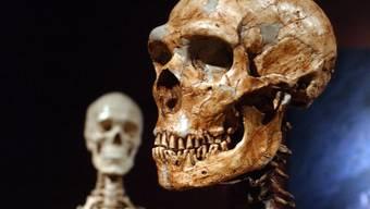Neandertaler und moderne Menschen haben mehr gemeinsam als oft gedacht. (Archivbild)