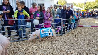 Ein Rekordhalter namens «Azeigerli»: Das Rennschwein erzielte an der HESO eine Siegesquote von fast 90 Prozent.