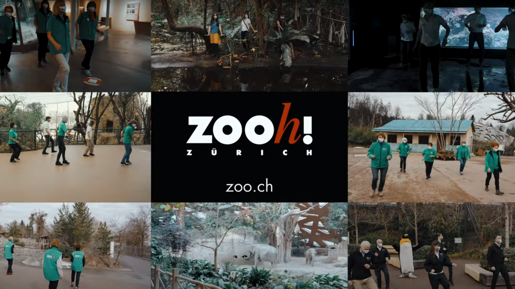 Zoo Zürich_Screenshot Youtube Jerusalema