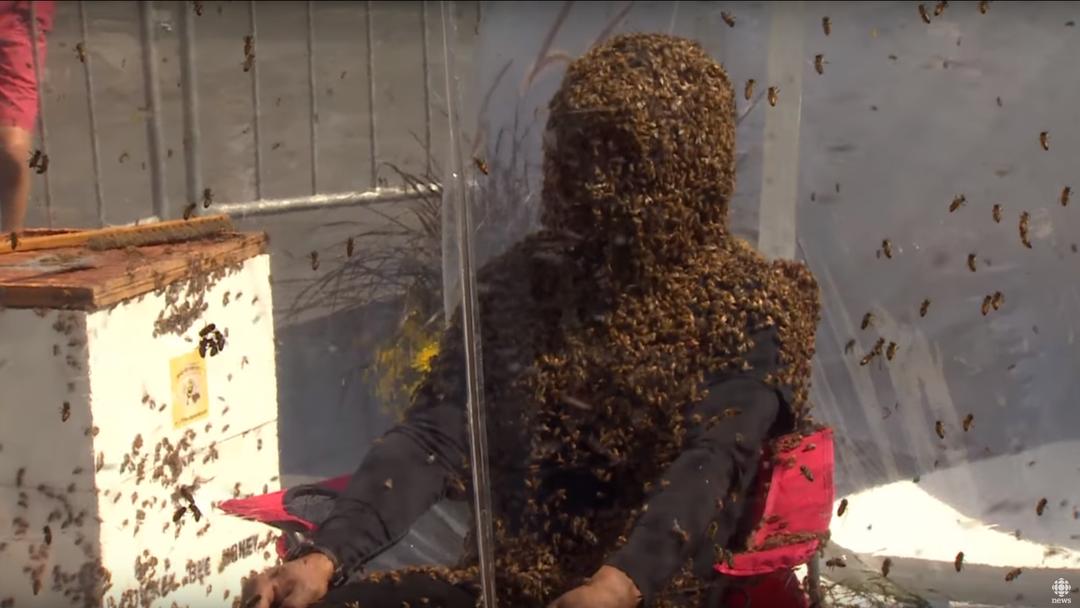 Bienen-Bart-Weltrekord in Toronto