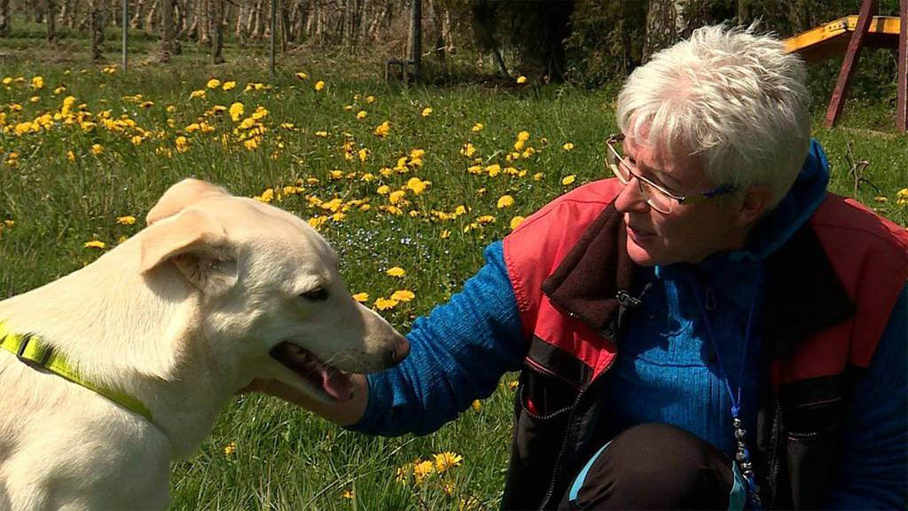 Vom Bettelhund zum Patenhund / Neue Zoo-Bewohner in Basel