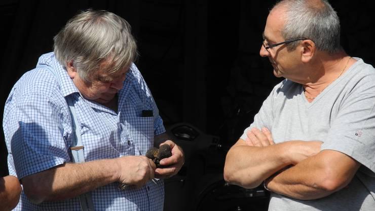 Fredy Balmer (links) ist Präsident der Schweizerischen Trüffelvereinigung und kam bei seiner Kochlehre erstmals mit den schwarzen Knollen in Kontakt.