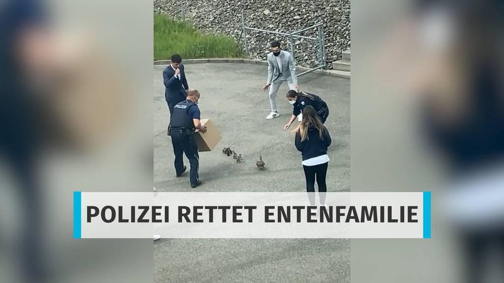 Mit leichten Schwierigkeiten: Polizei rettet Entenfamilie