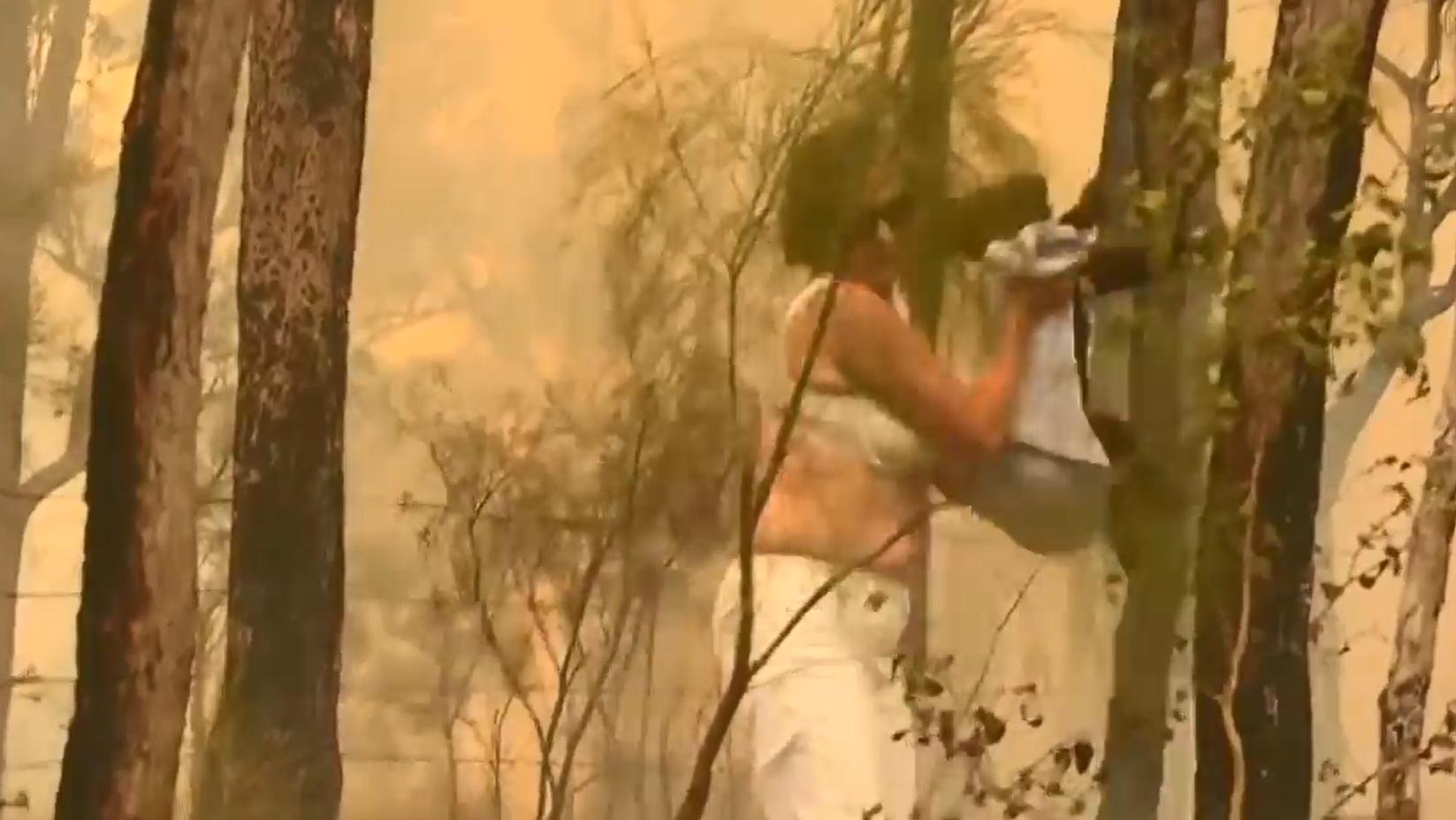 Mutige Australierin rettet Koala aus Buschbrand