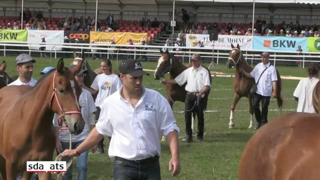Zahlreiche Zuschauer an der Pferdeparade im Jura
