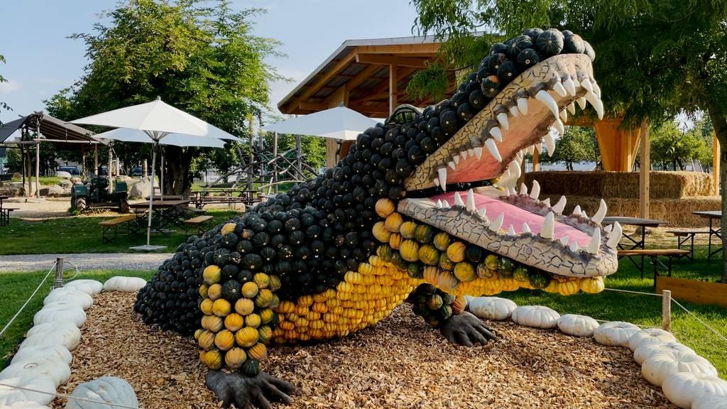 Krokodil aus Kürbissen: Eine von vielen Skulpturen auf dem Bächlihof.