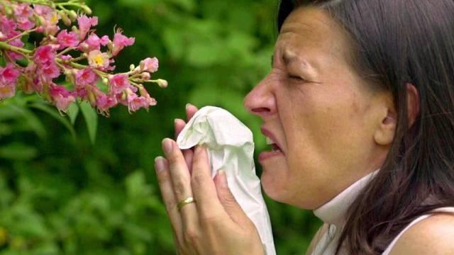 Die genaue Pollenprognose ermöglicht den Patienten, ihre Outdoor-Aktivitäten entsprechend zu planen und die Medikamente in ihrer Therapie präziser anzupassen. (Symbolbild)