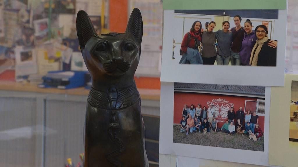 Seit September: 7 schwarze Katzen in Wetzikon als vermisst gemeldet