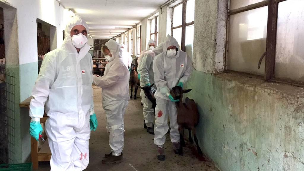 Paratuberkulose Puschlav Seuchenwehrpioniere Zivilschutz__w_1600__h_0